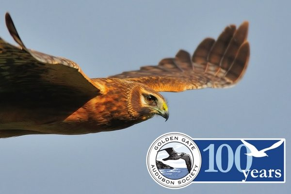 100-years-harrier