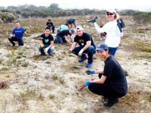 GGAS and volunteers from Twitter install native plants at Pier 94 uplands area in November 2014