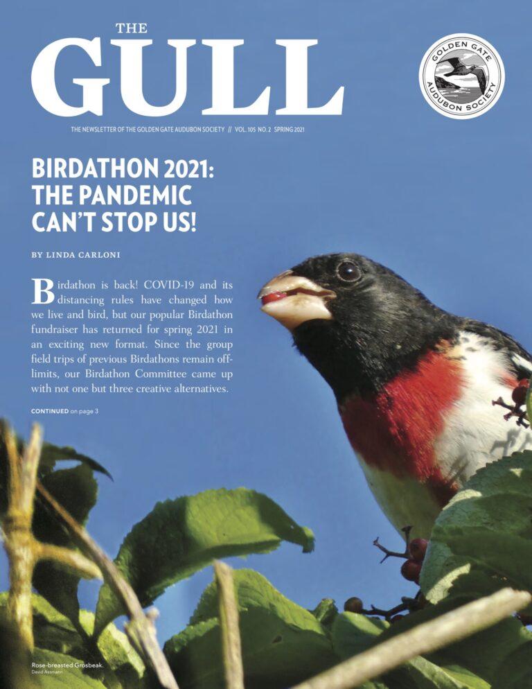Gull cover - spring 2021