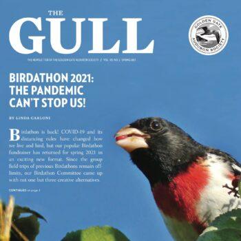 Gull - spring 2021 - cover