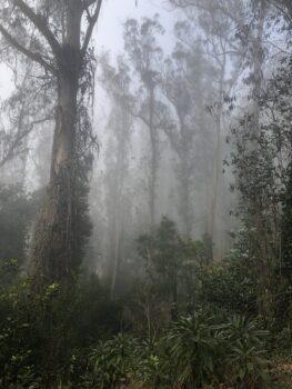 Canopy near plant nursery on Mount Sutro