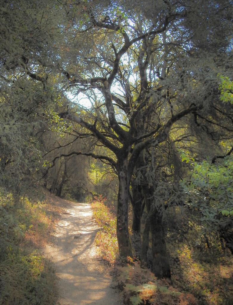 Sibley trail