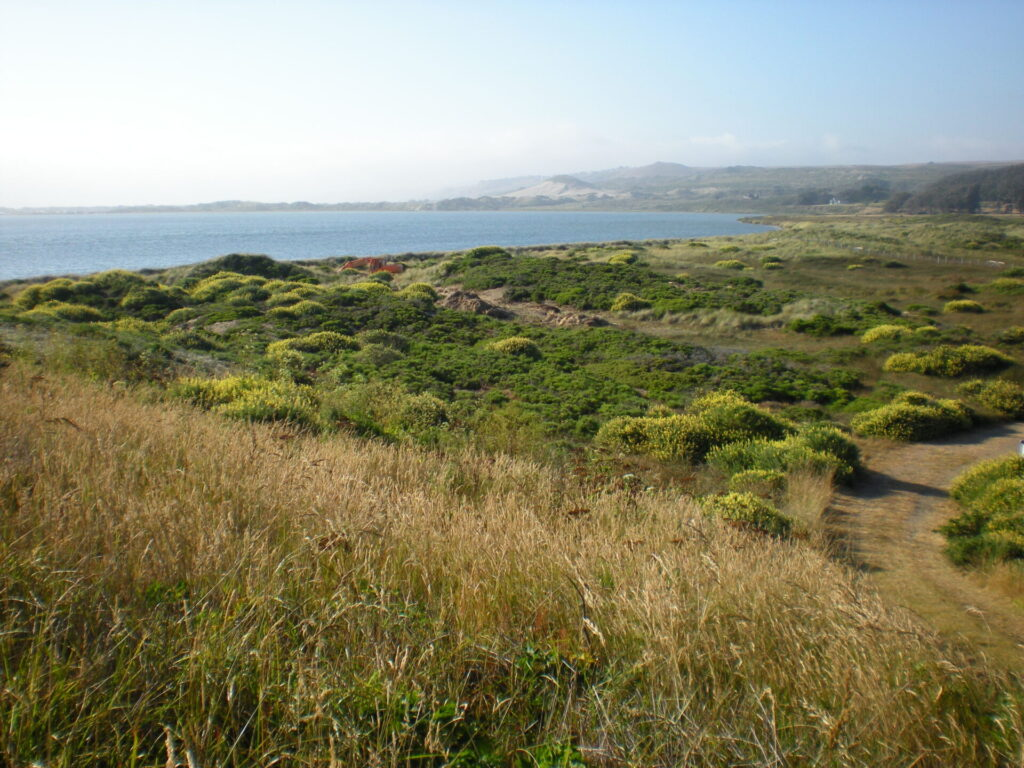 Coastal scrub habitat at Tom's Point