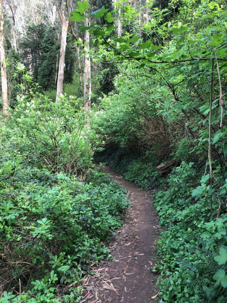 Unrestored portion of Historic Trail 2 on Mount Sutro