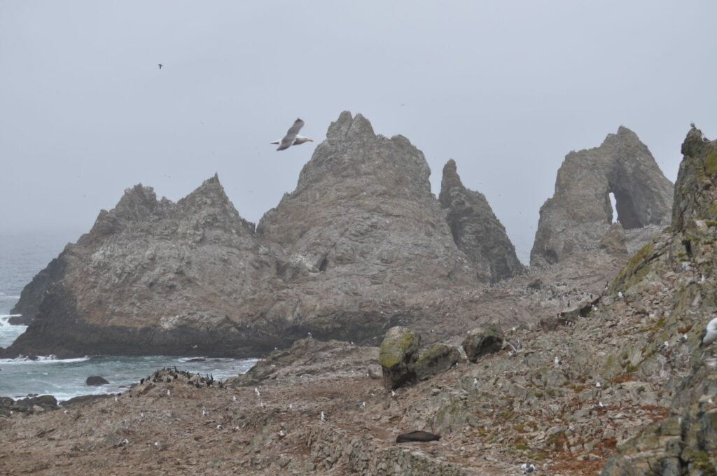 View from the Farallon Islands