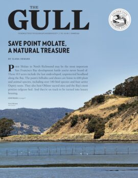 Summer Gull image of Point Molate