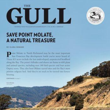 Summer 2021 Gull cover
