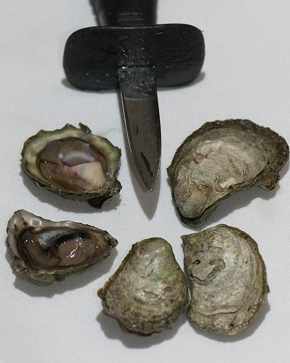 Olympia oysters and shucking knife