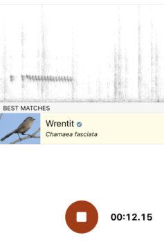 Screenshot of Merlins' Sound ID