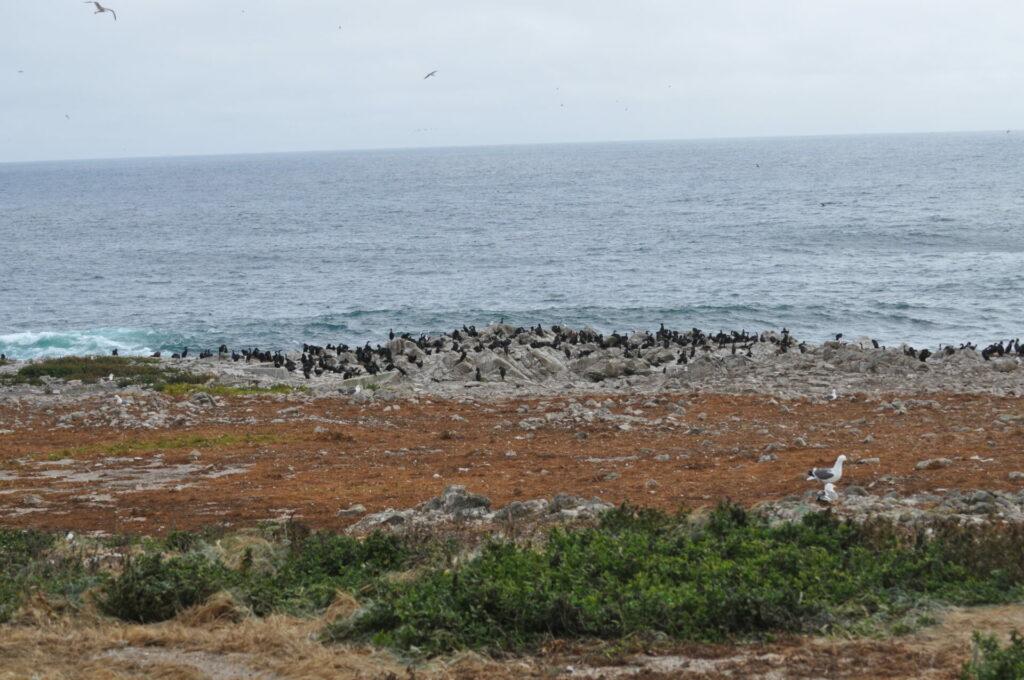Farallon Island view
