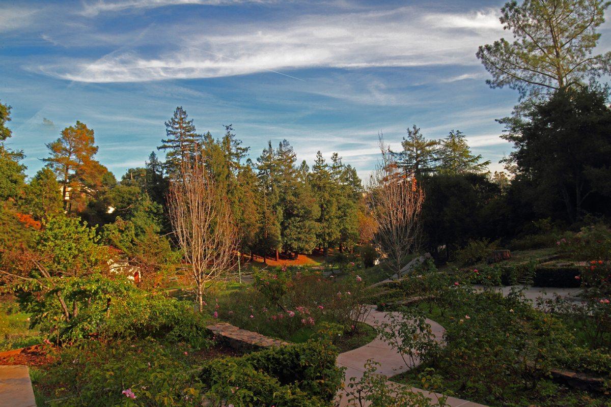 Golden Gate Audubon SocietyMorcom Rose Garden: Birding Hotspot ...