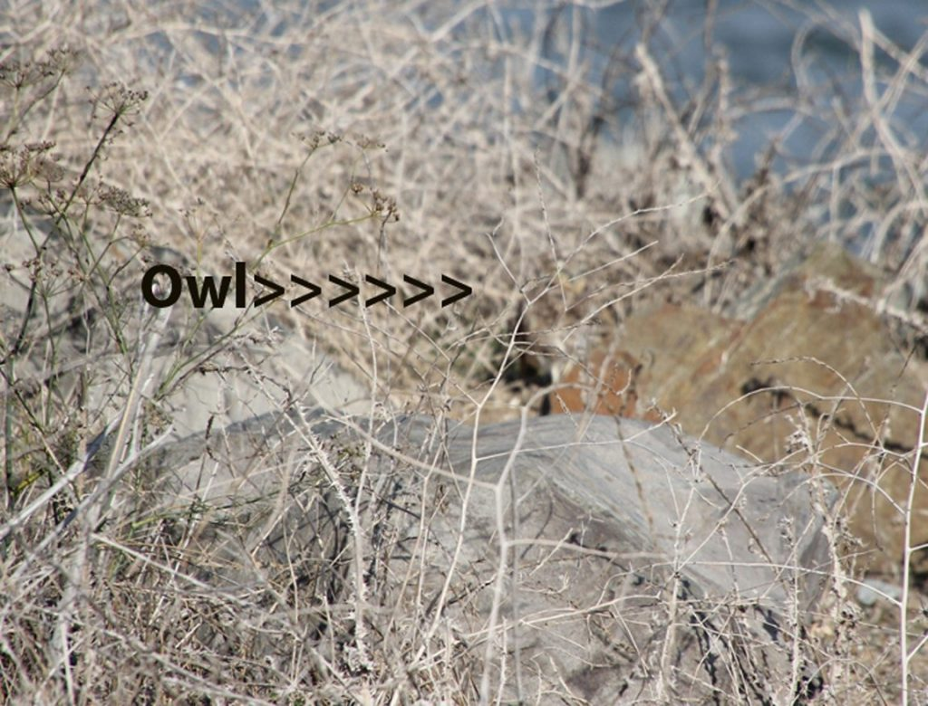 Why a docent with a scope is helpful in spotting the owls! Photo by Karen McLellan