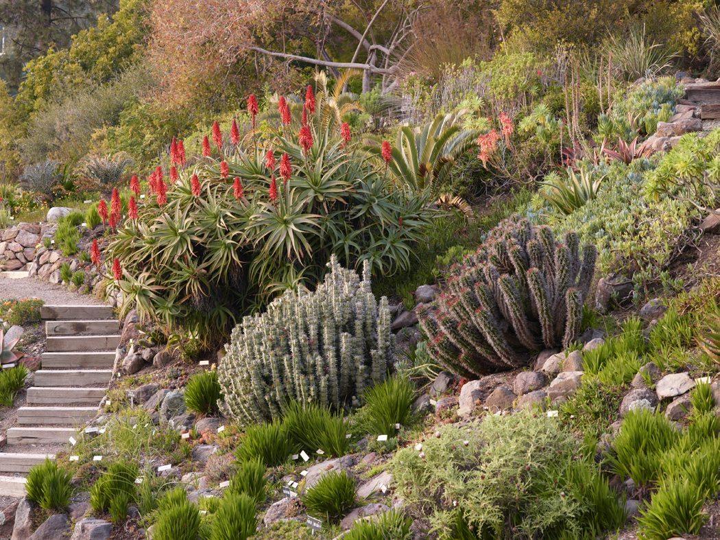 Golden Gate Audubon SocietyBirding Hotspot: U.C. Botanical Garden ...