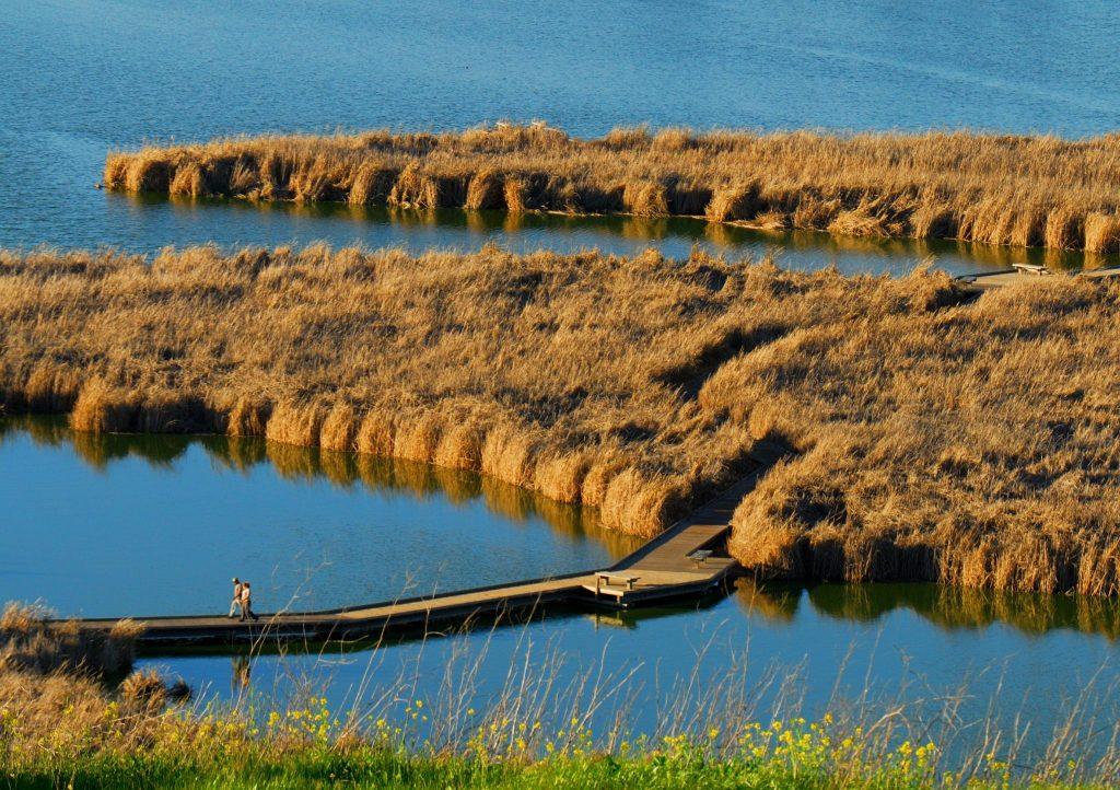 Boardwalk at Coyote Hills / Photo by Jerry Ting (EBRPD)