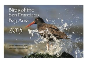 2013 Birds of the SF Bay Area calendar