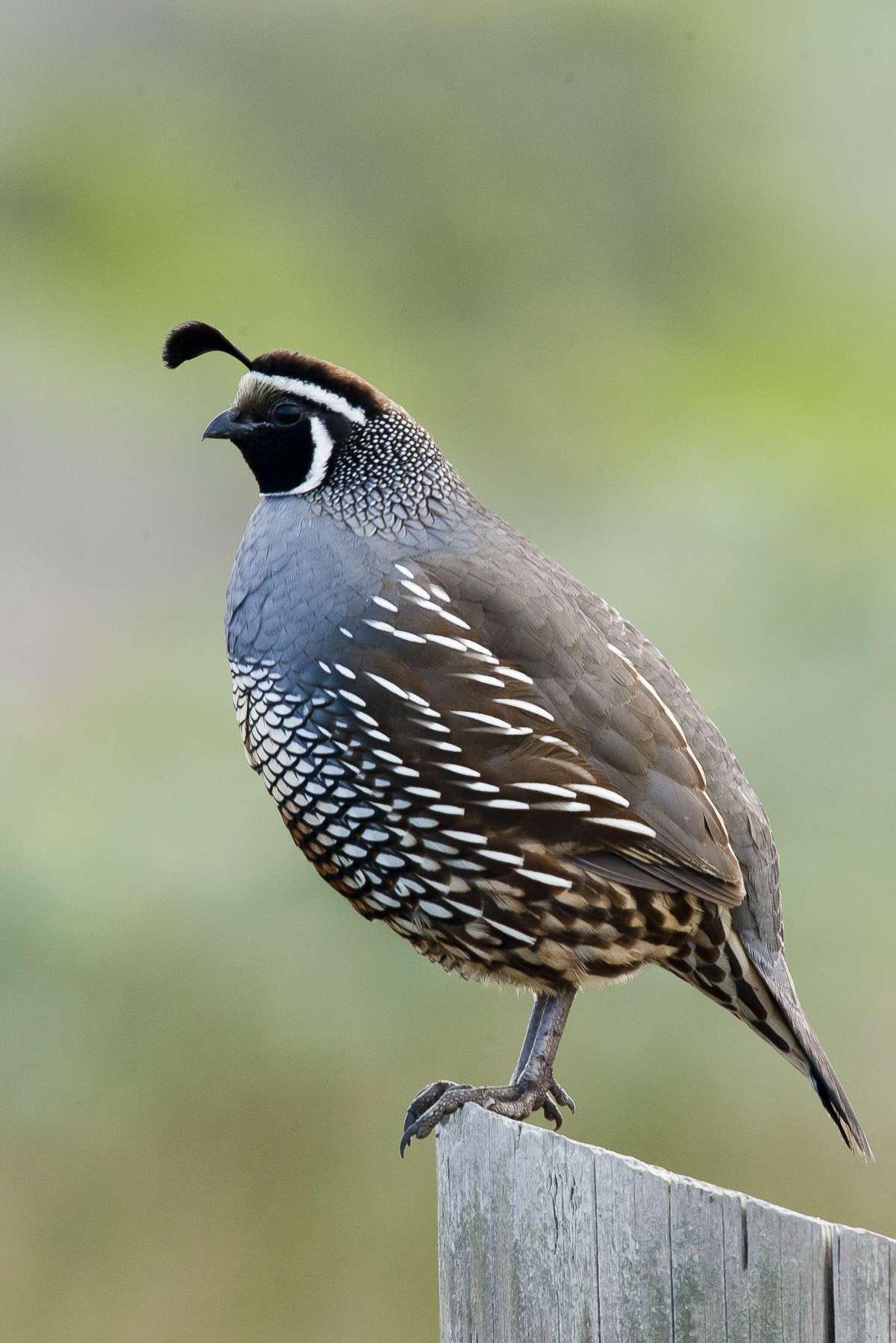 quail chat rooms Groupsyahoocom.