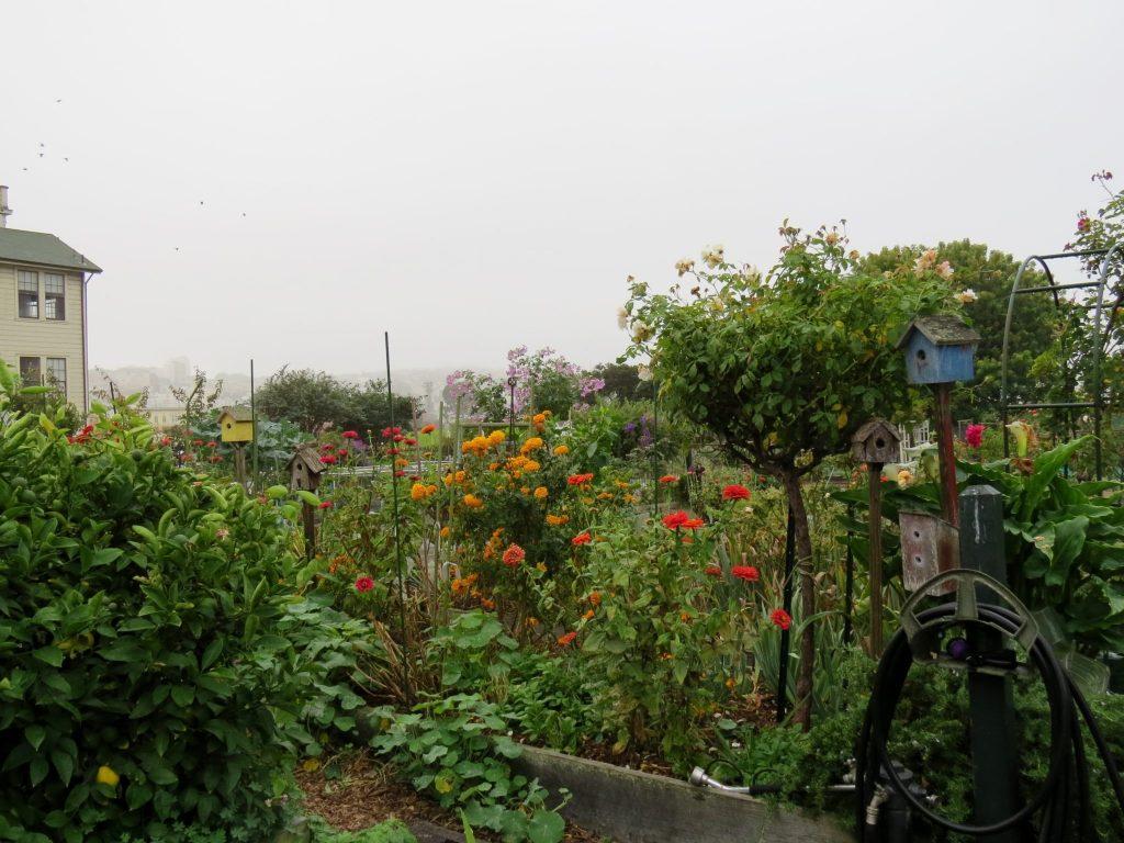 Community Garden at Fort Mason / Photo by David Assmann