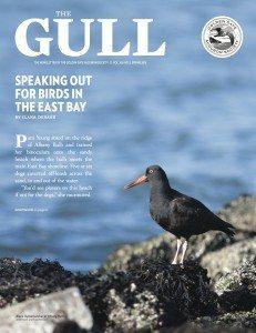 Gull_Spring2015