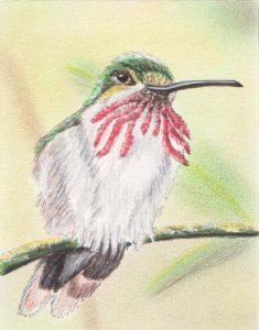 Hummingbird by Keith Harward
