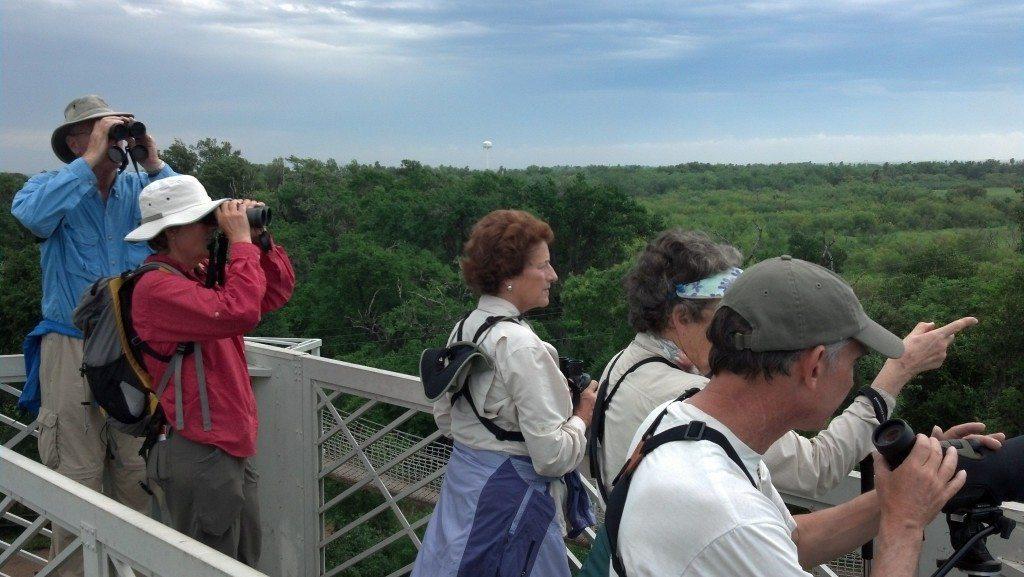 Hawk watch tower at Bentsen-Rio Grande Valley State Park