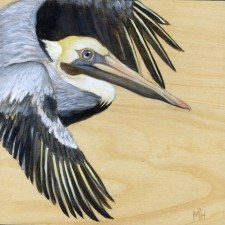 Brown Pelican by Maggie Hurley