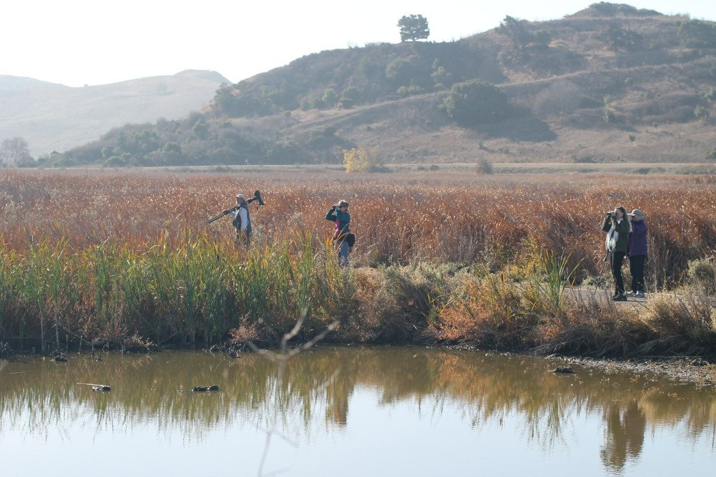 Coyote Hills in the fall / Photo by Ilana DeBare