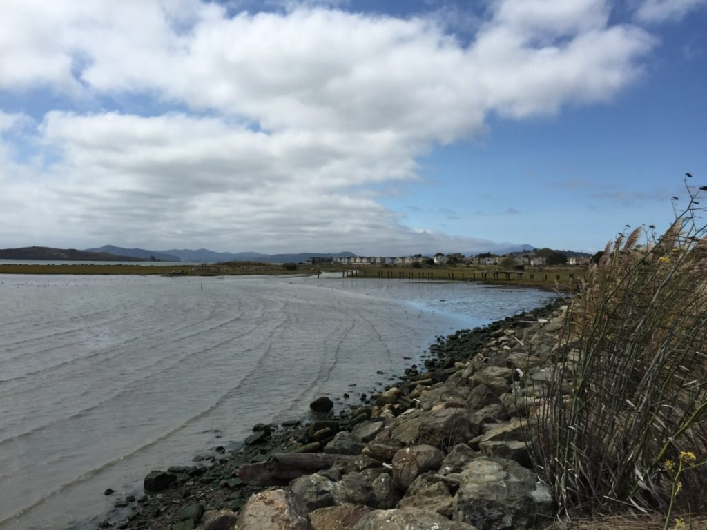 Mudflat near Point Isabel / Photo by Jee Beebe