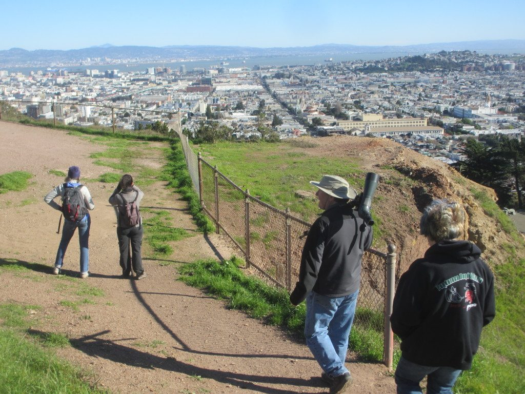 SF's hills offer beautiful views  while birding / Photo by Marissa Ortega-Welch
