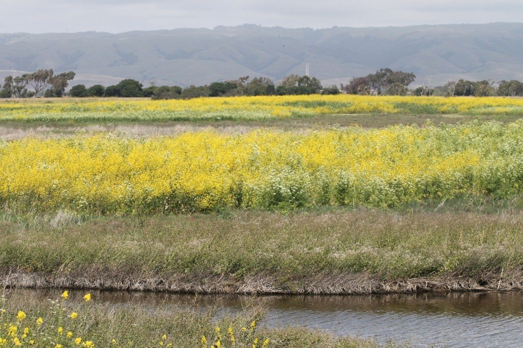 Coyote Hills in the spring / Photo by Ilana DeBare
