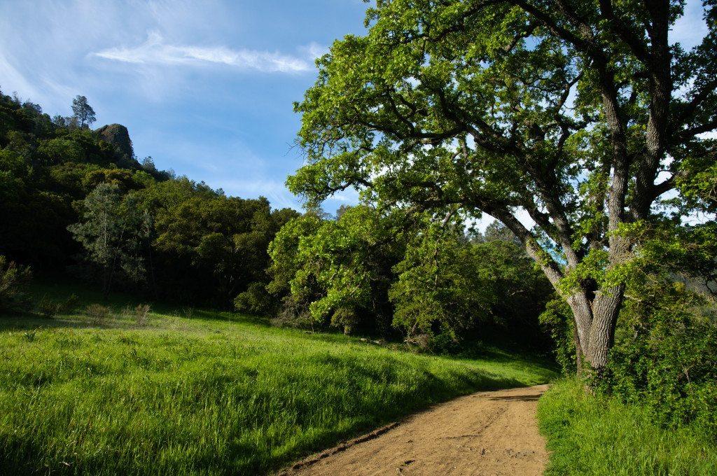 Mitchell Canyon in springtime, by Scott Hein