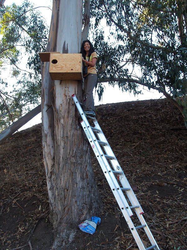 It's a long way up if you're not an owl! / Photo by Doug Mosher