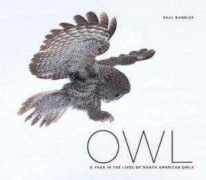 Owl_WEB