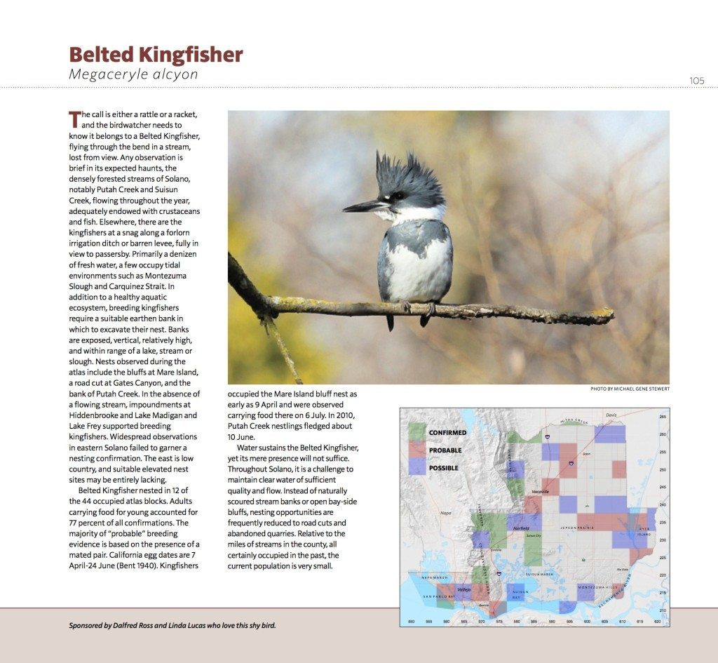 Page_105_Belted_Kingfisher