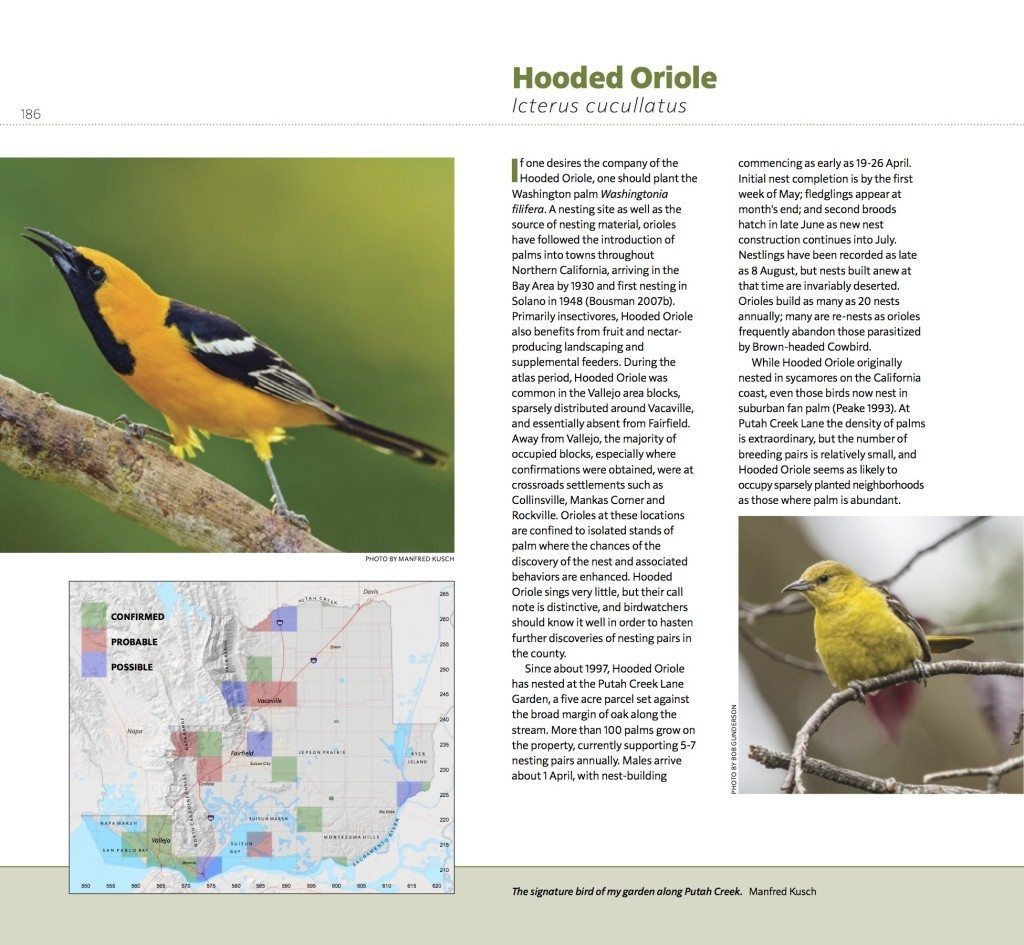 Page_186_Hooded_Oriole