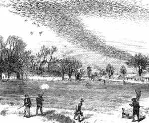 A 19th century Passenger Pigeon shoot