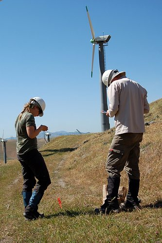 Wildlife biologists examine a dead bird at Altamont Pass in 2007 / Photo by Elizabeth Pepin/KQED