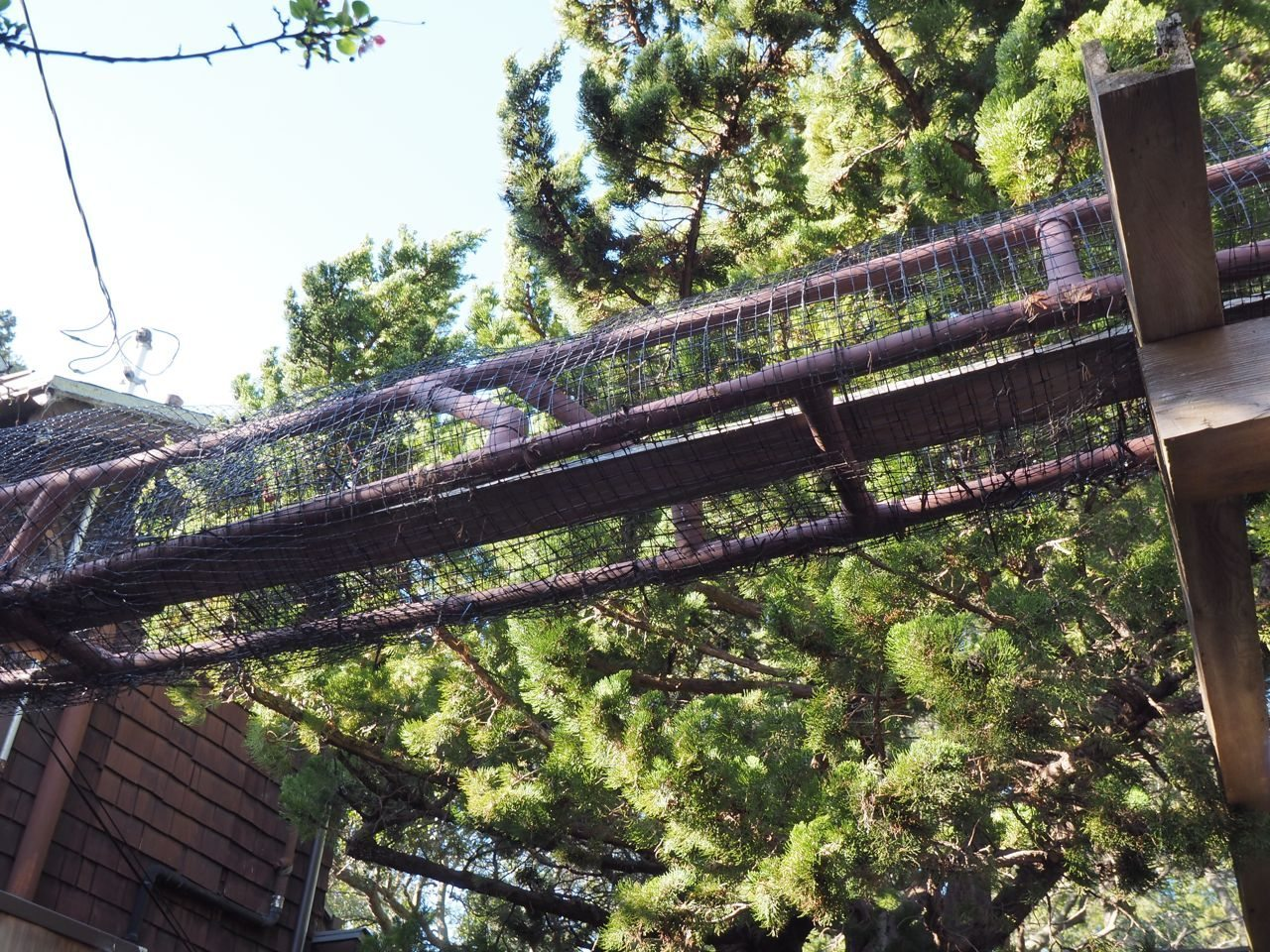 Golden Gate Audubon Societyprotecting Birds And Cats With