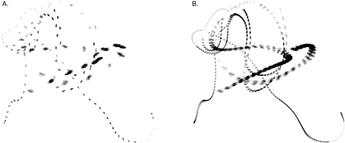 The flight paths of two blue bottle flies sampled from high speed videos, showing the time resolution at 40 frames per second (the typical human visual speed) vs. 120 frames per second (the typical avian visual speed).