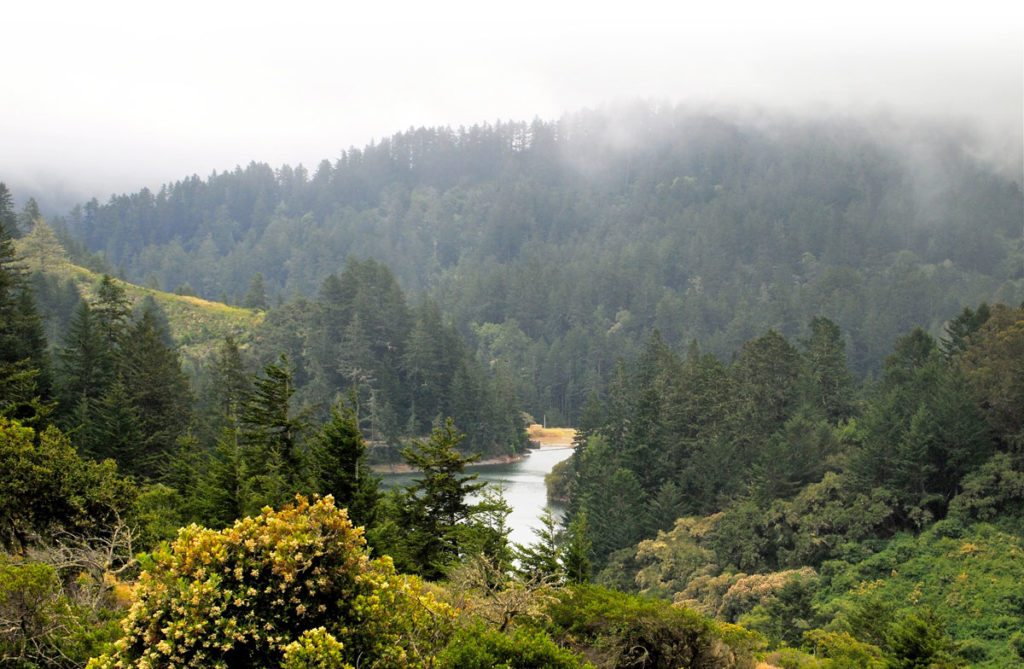 Pilarcitos Reservoir in the Peninsula Watershed / Photo by Emma Leonard, Bay Nature