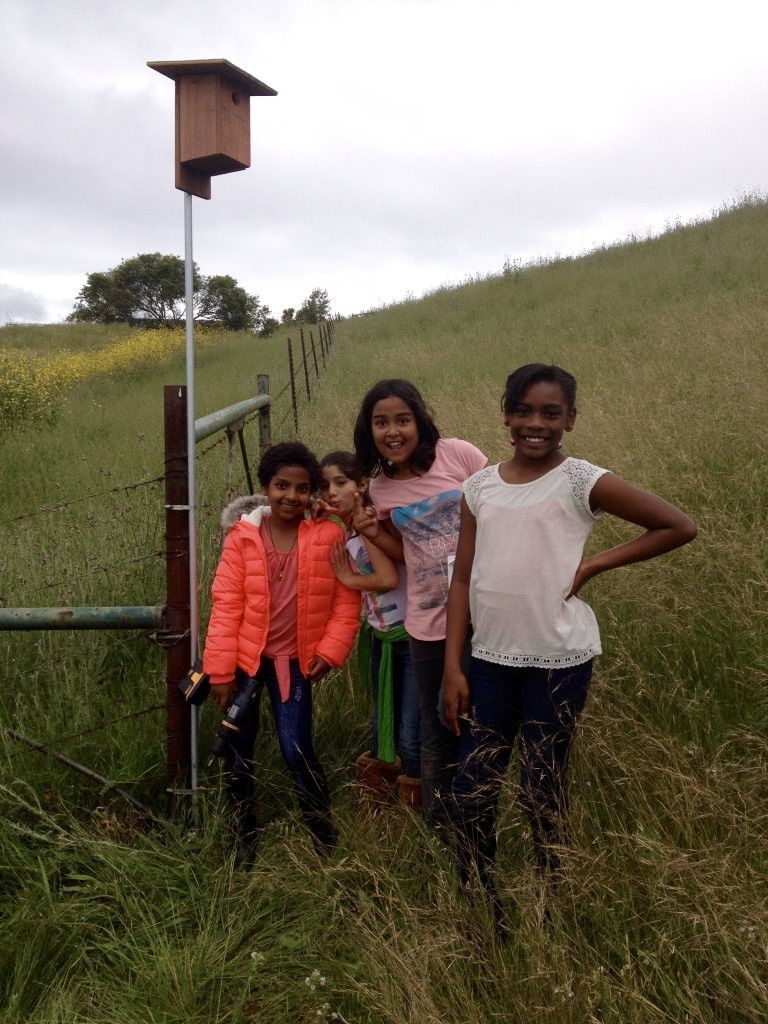 Girls from Stege Elementary erecting the box that Western Bluebirds used / Photo by Anthony DeCicco